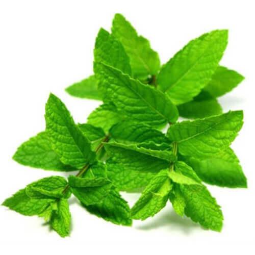 گیاه نعنا